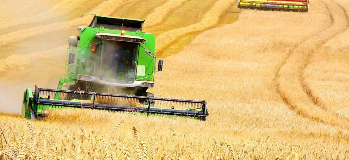 Рекордный урожай и снижение цен