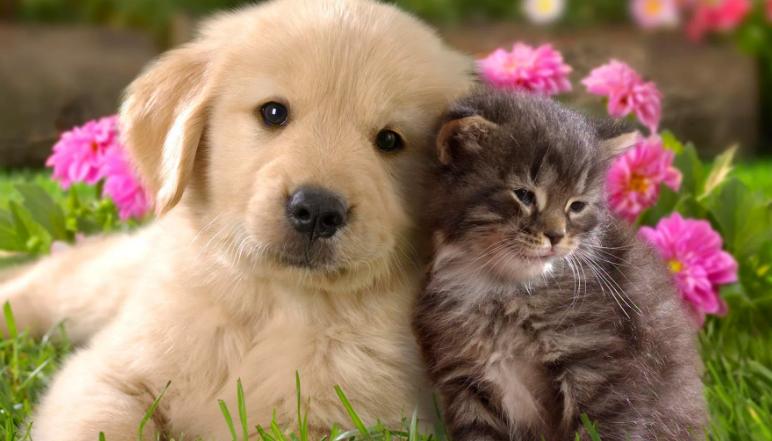 В Югре посчитают кошек и собак. Создана первая в России база животных