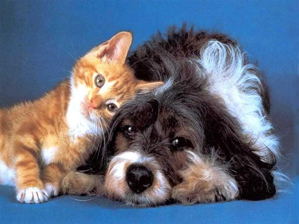 Россиян ограничили по количеству животных в квартире — новые правила