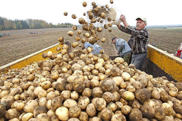 Россиян предупредили о грядущем подорожании картофеля